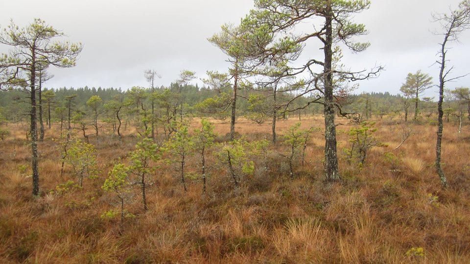 Åstorpsmossen direkt syd om Lindfors utefter vägen mot Sutterhöjden är räddad åt framtiden. Naturskyddsföreningen i Karlstad är en av tre instanser som överklagat beslutet att tillåta brytning av torv i mossen.